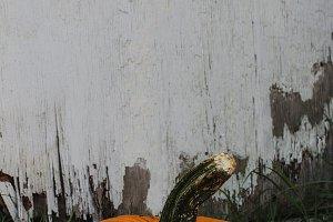Pumpkin Harvest | Minimalism