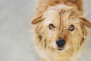 Sweet Scruffy Dog