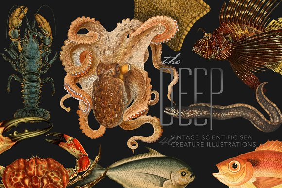The Deep Sea Creature Illustrations