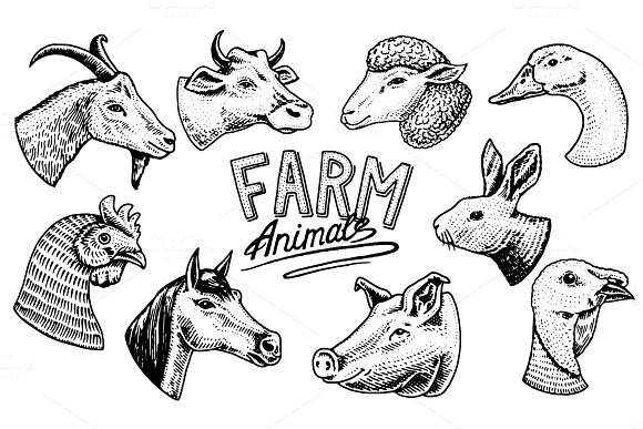 Farm animals. Head of a
