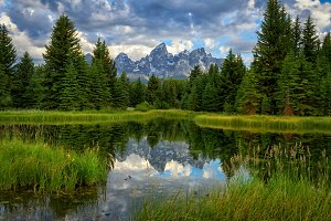 Mountain Valley Beaver Pond