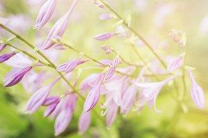 Beautiful purple flower.
