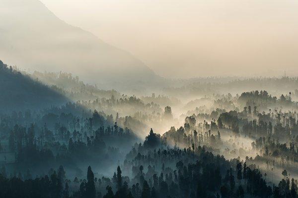 Nature Stock Photos: Casanowe-studio - Coniferous Forest with sun beam