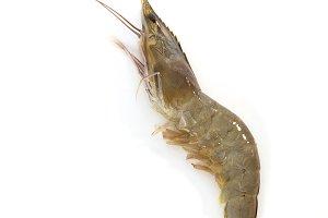 One raw shrimp  on white
