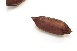 Three Cocoa pod on a white
