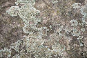 Surface concrete cement wall texture