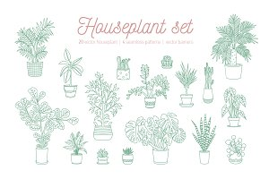 Houseplants growing in pots