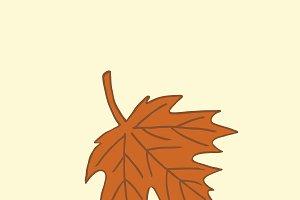 Single brown maple autumn leaf