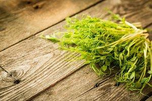 Pea micro greens on rustic