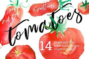 Tomato watercolor illustrations