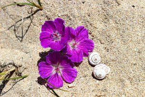 Snails and Wild Geranium Flowers