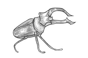 big beetle illustration