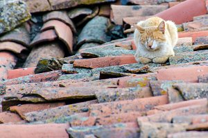 alley cat sleeping on the roof