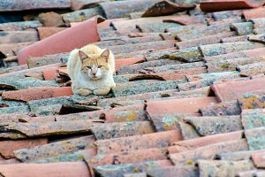 stray cat lying on the roof tiles