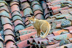 tabby cat walking on the roof