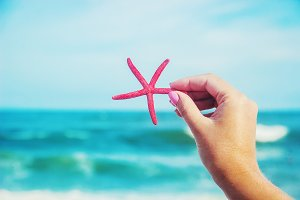 Shells and starfish on the sea. summ