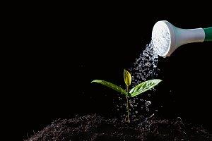 Farmers are watering seedlings on bl