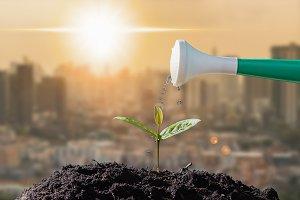 Farmers are watering seedlings on ci