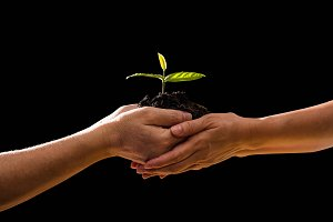 couple hands holding green plant tog