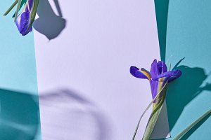 Irises and a white sheet of paper