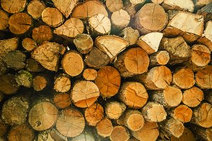 Pile of wood logs storage for