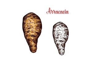 Arracacia root vegetable sketch