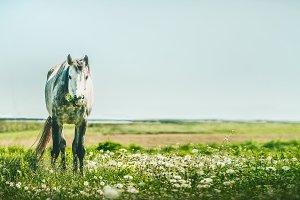Summer horse grazing, banner