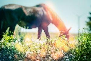 Grasses of horse pasture