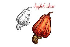 Apple cashew fruit