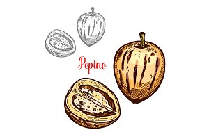 Pepino fruit pear sketch design