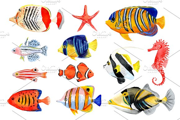 Tropical fish and seashells in Patterns - product preview 1