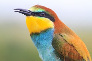 beautiful colorful wild bird