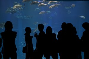 People in aquarium