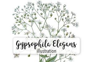 Florals: Vintage Gypsophila Elegans