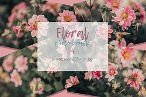 Photo bundle - Pink dahlia flowers
