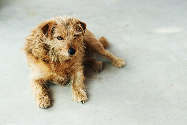 Stock Photos: René Jordaan Photography - Sweet Little Dog Resting