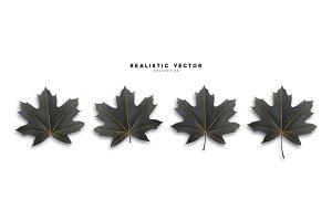 Maple leaves,