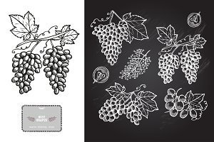 Hand Drawn Grapes