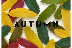 Fall Foliage. Autumn background