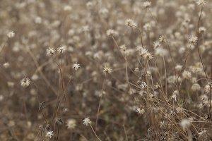 Grass flower for background