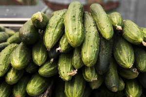 Close up on a green cucumber on a