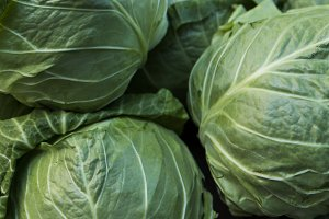 Cabbage background. Fresh cabbage