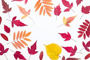 Multicolored autumn leaves frame. He