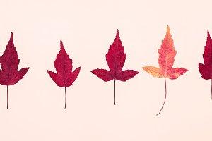 Multicolored autumn leaves pattern o