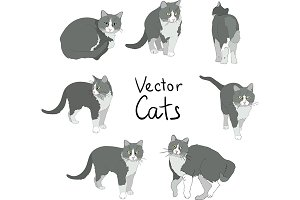 Cats poses set