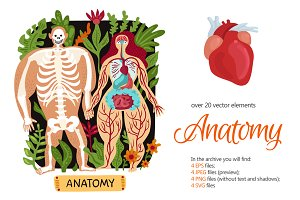 Anatomy Flat Set