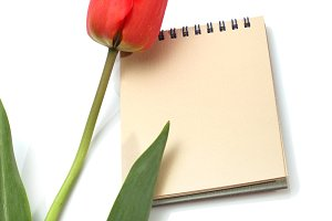 red tulip and notepad
