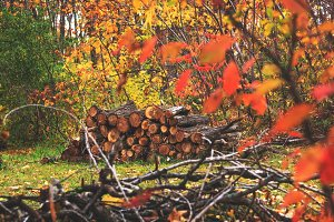 Pile of wood in autumn background