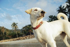 White dog on a beach