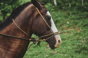Working Horse Profile